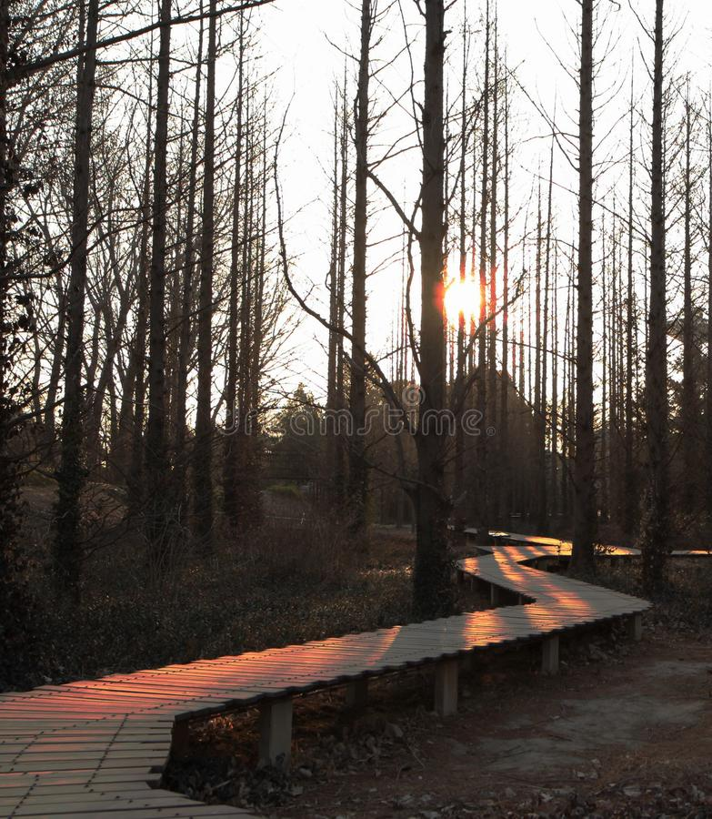 O nascer do sol bonito na floresta fotos de stock