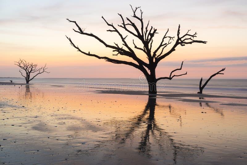 O nascer do sol colorido e os carvalhos verdes americanos refletiram na praia na baía da Botânica na ilha de Edisto perto de Char fotos de stock