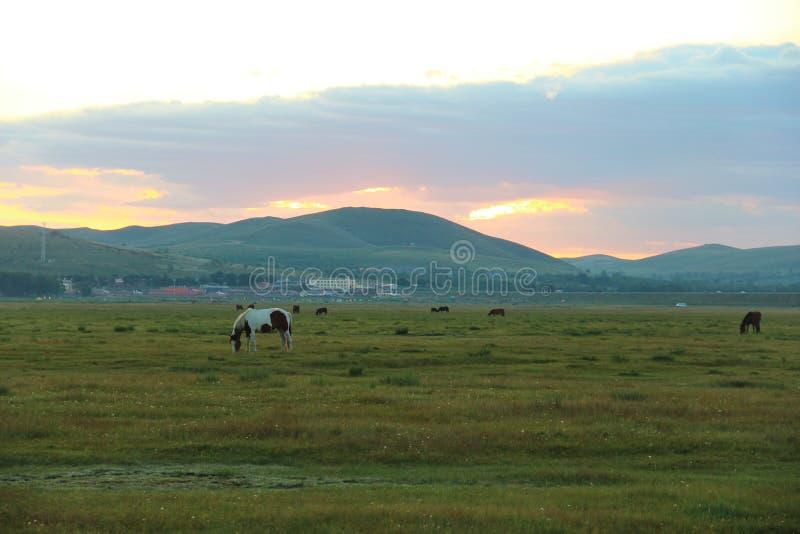 O nascer do sol da pradaria ii imagem de stock