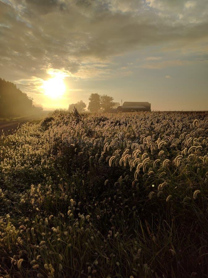 O nascer do sol da queda ilumina a recompensa da colheita imagens de stock