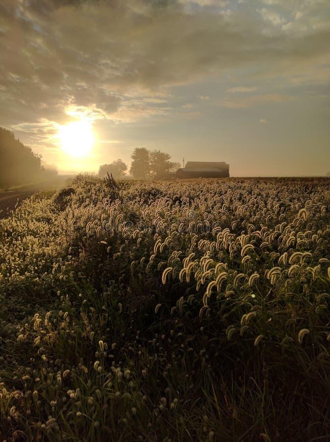 O nascer do sol da queda ilumina a recompensa da colheita fotografia de stock royalty free