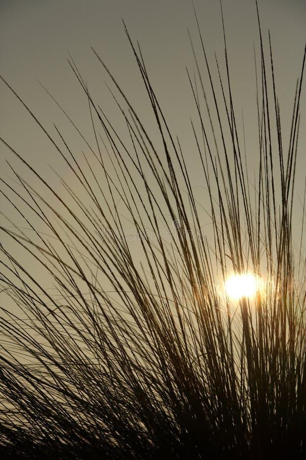 O nascer do sol jogou a grama imagem de stock
