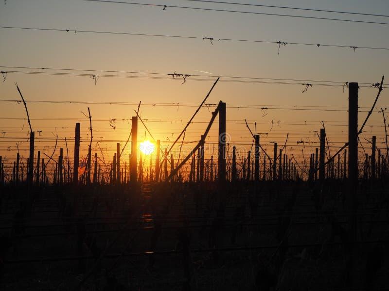 O nascer do sol no inverno nos montes dos vinhedos aproxima o lago Garda imagens de stock