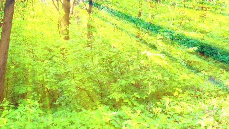 O nascer do sol profundo 3D de Forest Fairy Tale Scene rende filme