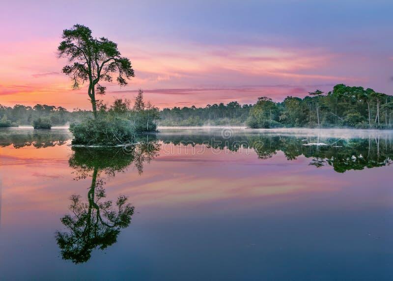 O nascer do sol se reflete em um lago em uma floresta no Sul dos Países Baixos imagens de stock