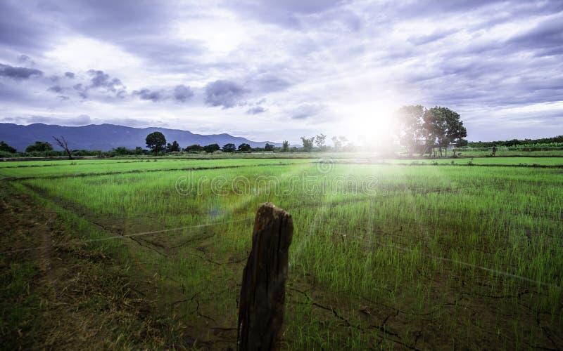 O nascer do sol verde luxúria da manhã fá-lo sentir refrescado ao mesmo tempo fotografia de stock