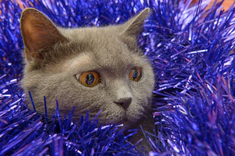 O Natal britânico do gato imagens de stock royalty free