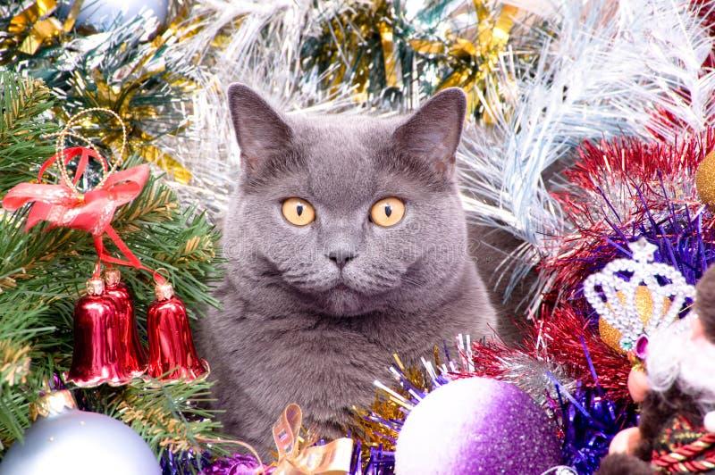 O Natal britânico do gato foto de stock