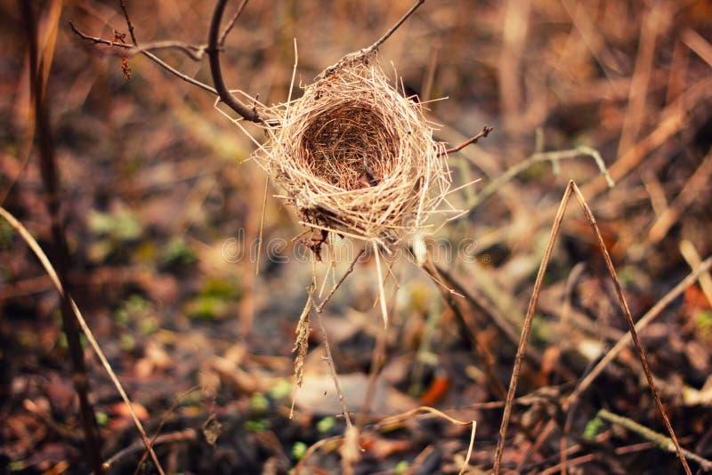 O ninho abandonado foto de stock