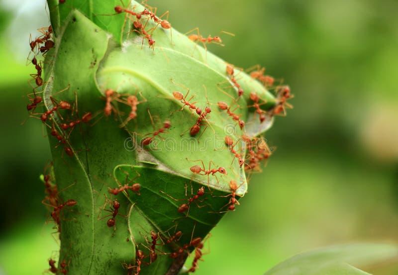 O ninho das formigas fotografia de stock royalty free