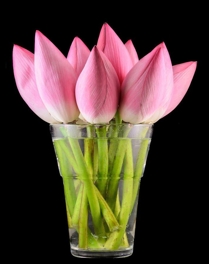 O nucifera cor-de-rosa do Nelumbo floresce em um vaso transparente, fim acima fotos de stock royalty free