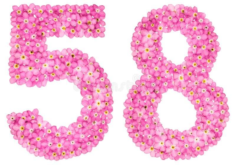 O numeral árabe 58, cinquenta e oito, do miosótis cor-de-rosa floresce, imagem de stock