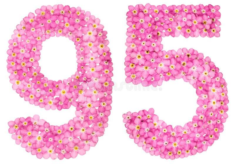 O numeral árabe 95, noventa cinco, do miosótis cor-de-rosa floresce, imagem de stock royalty free