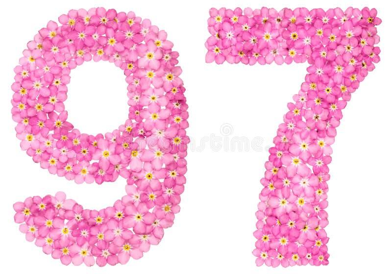 O numeral árabe 97, noventa e sete, do miosótis cor-de-rosa floresce foto de stock
