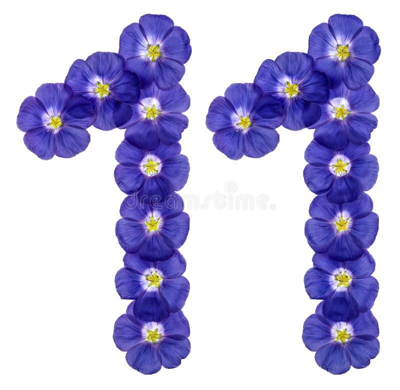 O numeral árabe 11, onze, das flores azuis do linho, isolou o fotos de stock