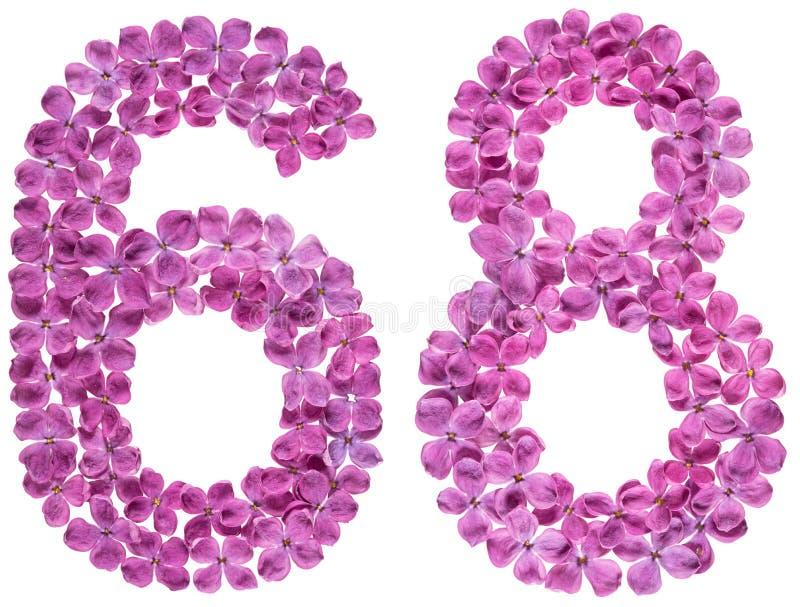 O numeral árabe 8, sessenta e oito, das flores do lilás, isolou o fotografia de stock royalty free