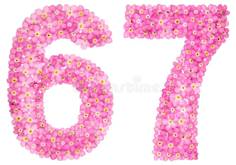 O numeral árabe 67, sessenta e sete, do miosótis cor-de-rosa floresce, fotos de stock