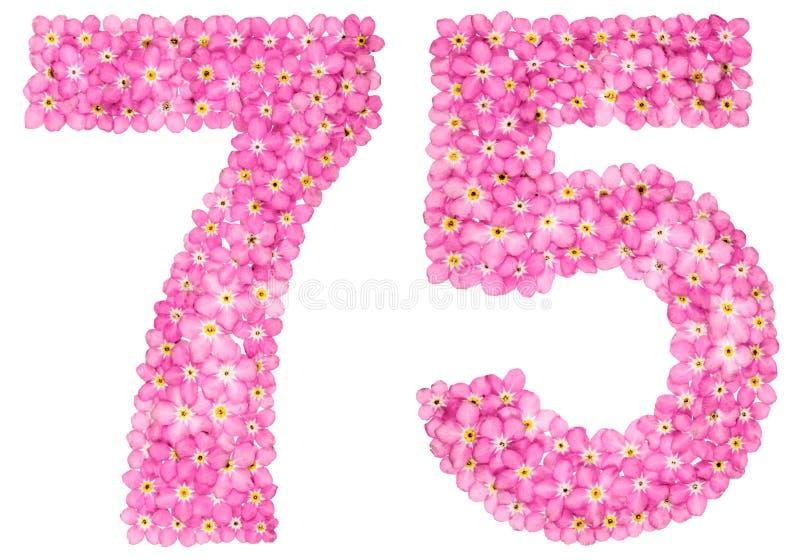 O numeral árabe 75, setenta cinco, do miosótis cor-de-rosa floresce foto de stock royalty free