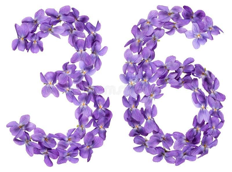O numeral árabe 36, trinta e seis, das flores da viola, isolou o fotos de stock royalty free
