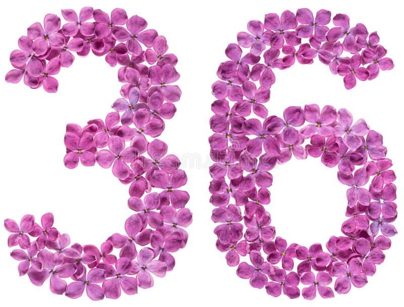 O numeral árabe 36, trinta e seis, das flores do lilás, isolou o foto de stock