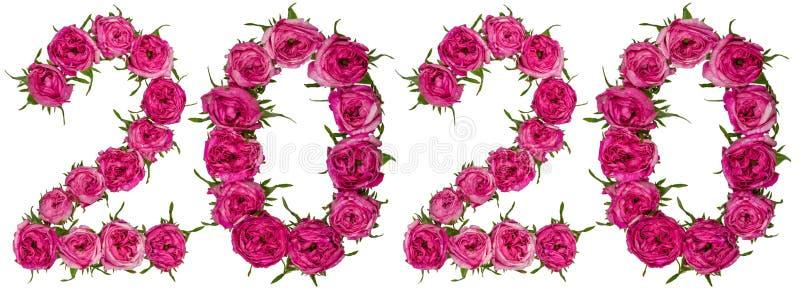 O numeral 2020 das flores vermelhas de aumentou, isolado no backgro branco fotos de stock royalty free