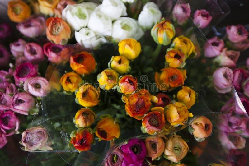 O olhar e o cheiro da sensação colorem l ramalhete das rosas fotos de stock royalty free