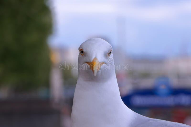 O olhar fixo verdadeiro fotografia de stock