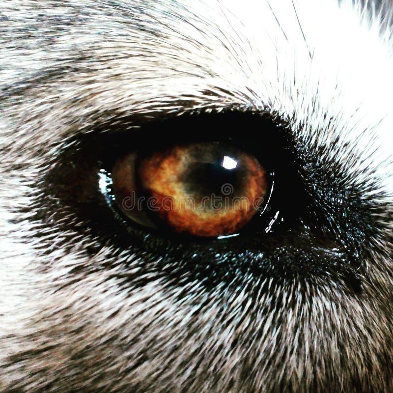 O olho foto de stock