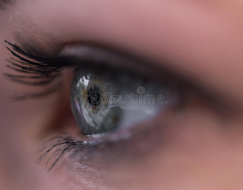O olho bonito da mulher com as pestanas extremamente longas fotografia de stock royalty free