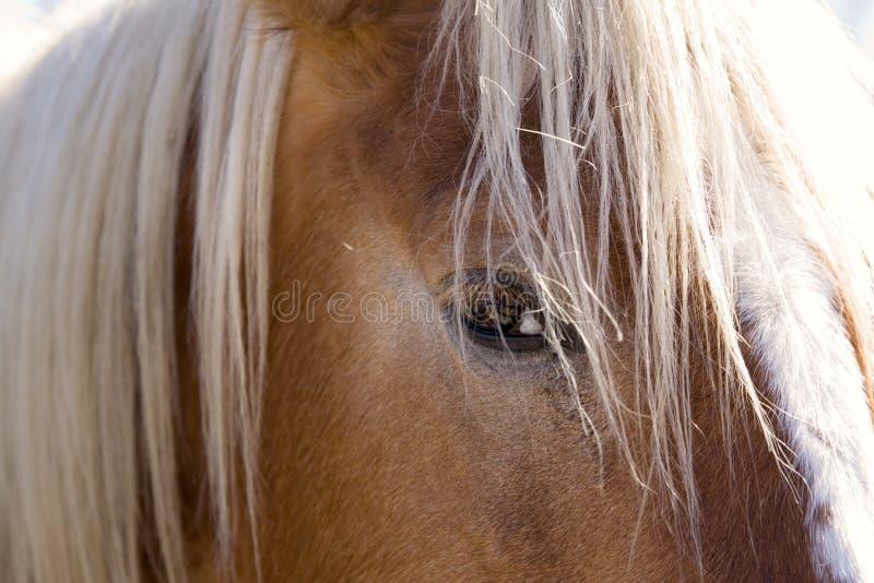 O olho do cavalo visto em uma distância próxima fotos de stock royalty free
