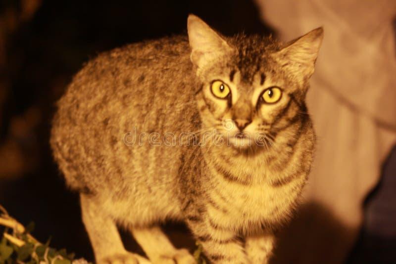 O olho estranho de um gato misterioso na obscuridade fotografia de stock
