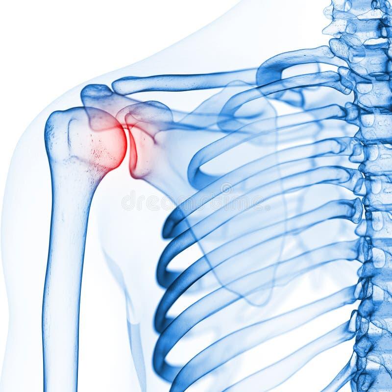 O ombro esqueletal ilustração do vetor