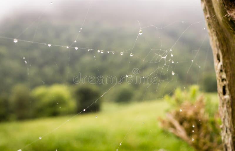 O orvalho cobriu spiderwebs na grama no nascer do sol com a névoa no fundo fotos de stock