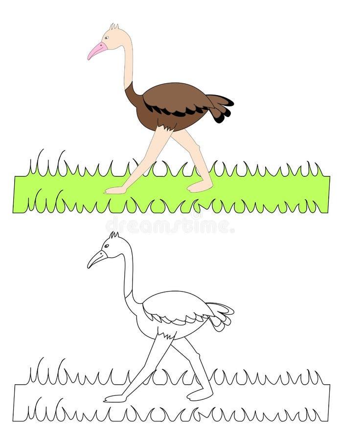 Cute ostrich drawing