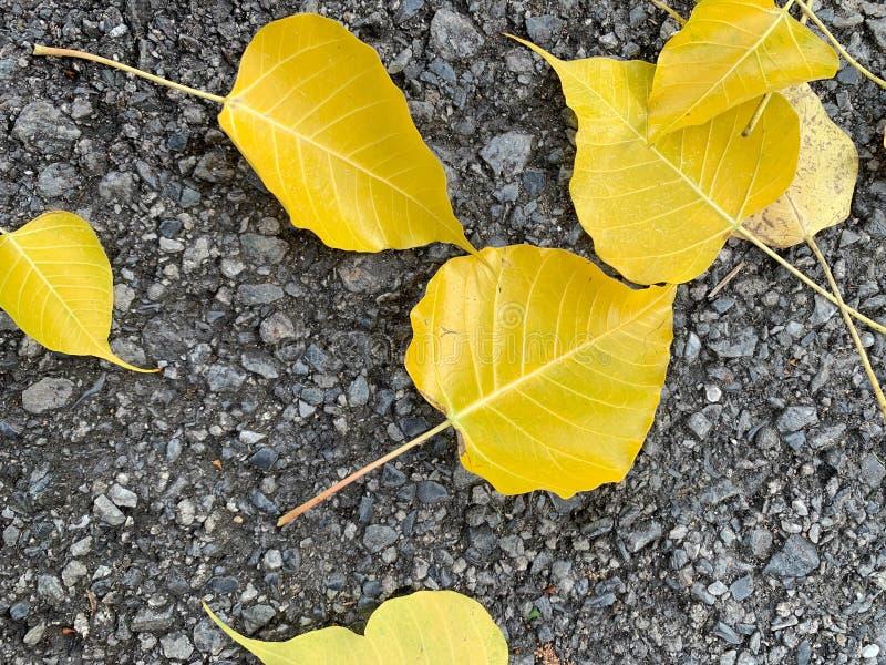 O outono abstrato deixa as folhas amarelas espalhadas no assoalho do cimento imagens de stock royalty free