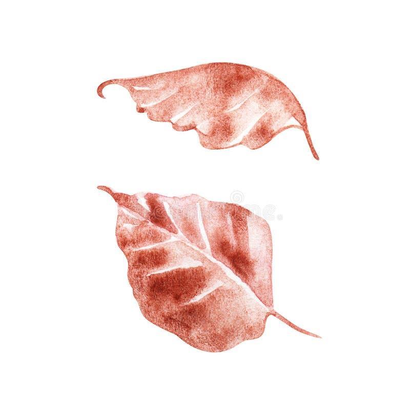 O outono aumentou as folhas no fundo branco Aguarela pintado ? m?o ilustração stock