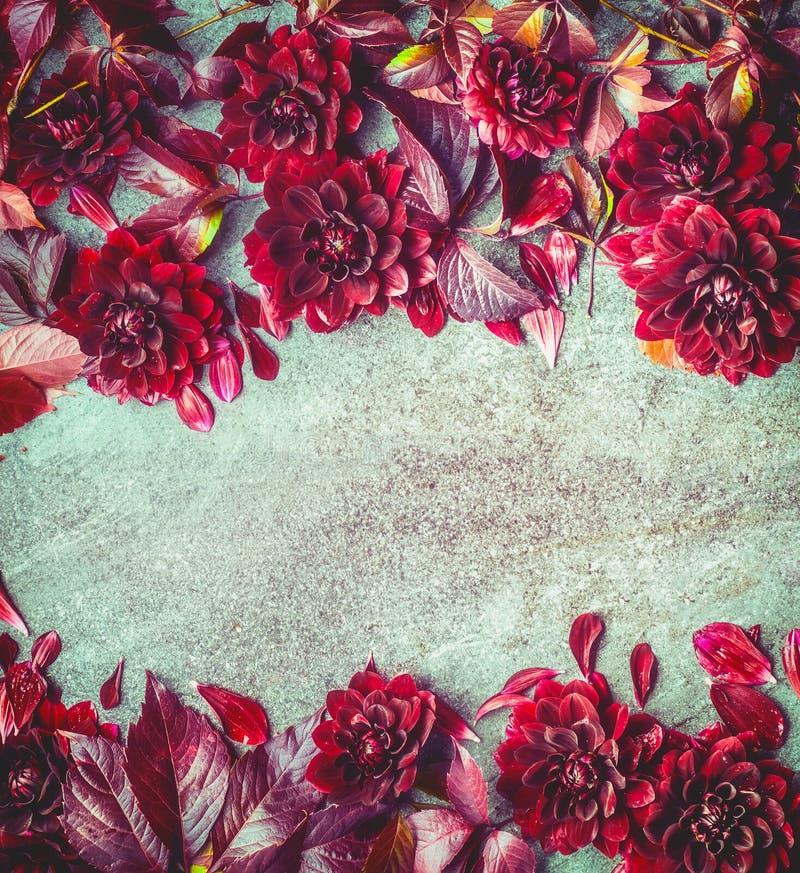 O outono bonito Borgonha floresce o fundo, vista superior Quadro floral da disposição ou de cartão Crisântemo da queda imagem de stock royalty free