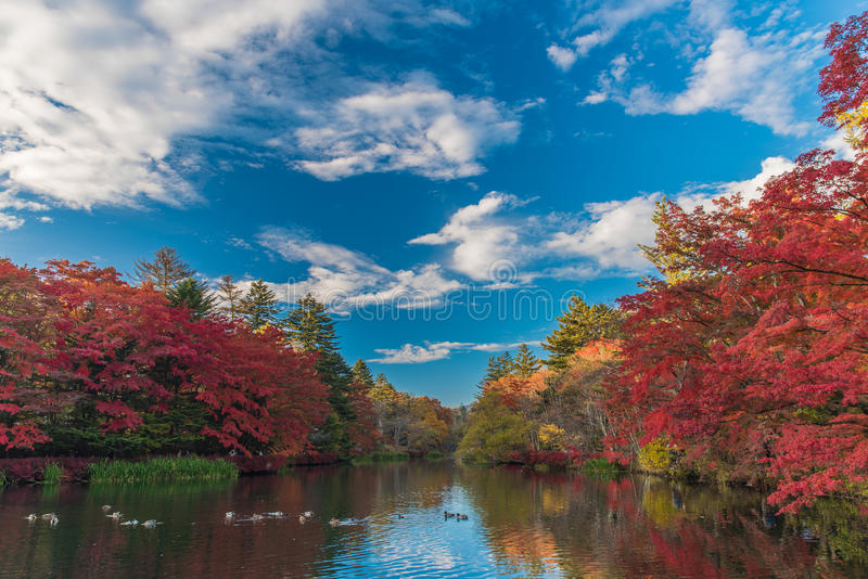 O outono colore a lagoa fotos de stock