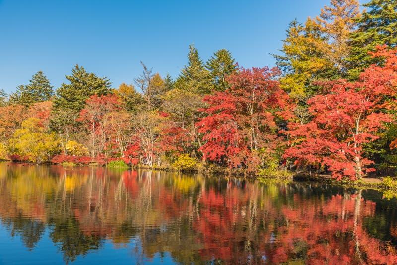 O outono colore a lagoa imagens de stock