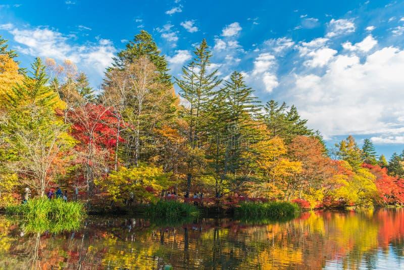 O outono colore a lagoa foto de stock royalty free