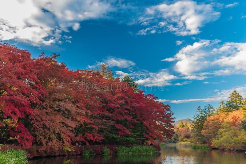 O outono colore a lagoa imagem de stock royalty free
