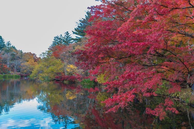 O outono colore a lagoa imagens de stock royalty free
