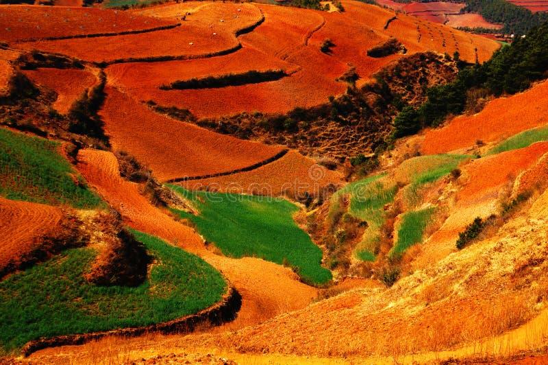 O outono colorido arquivado imagem de stock