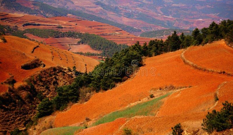 O outono colorido arquivado fotos de stock royalty free