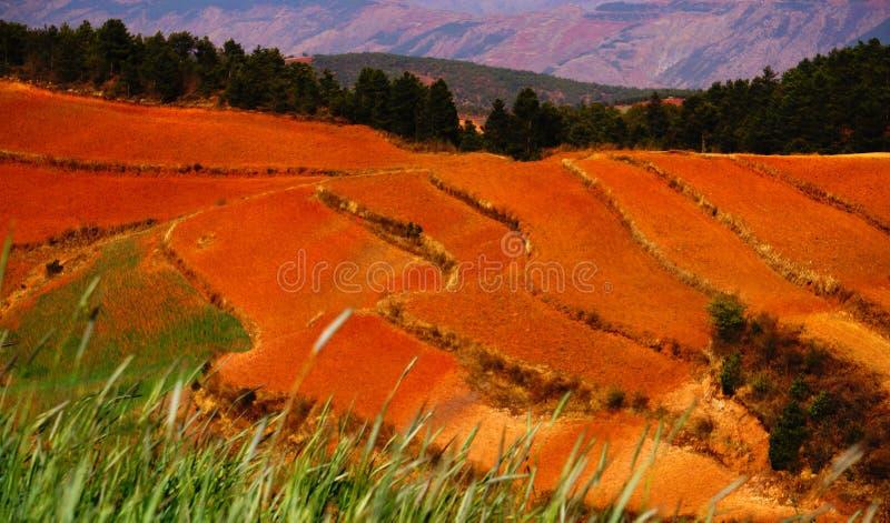 O outono colorido arquivado imagens de stock