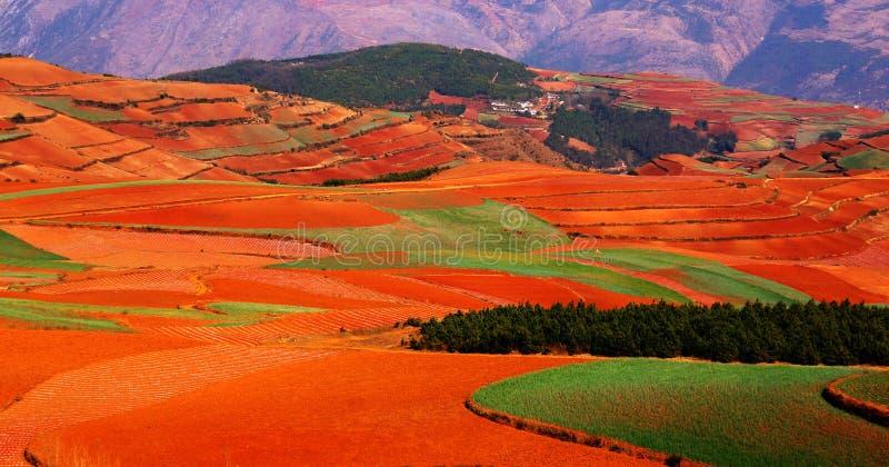 O outono colorido arquivado fotografia de stock royalty free