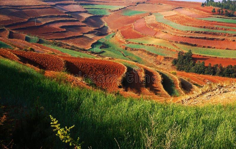 O outono colorido arquivado foto de stock royalty free