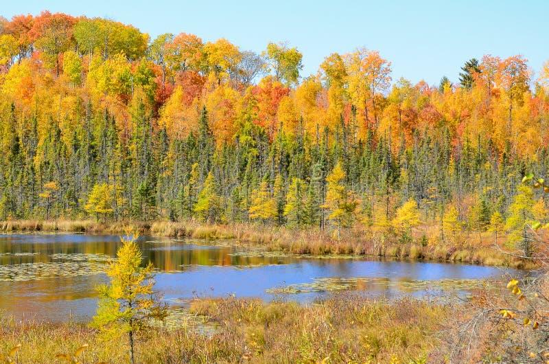 O outono coloriu as árvores que refletem na água da lagoa foto de stock