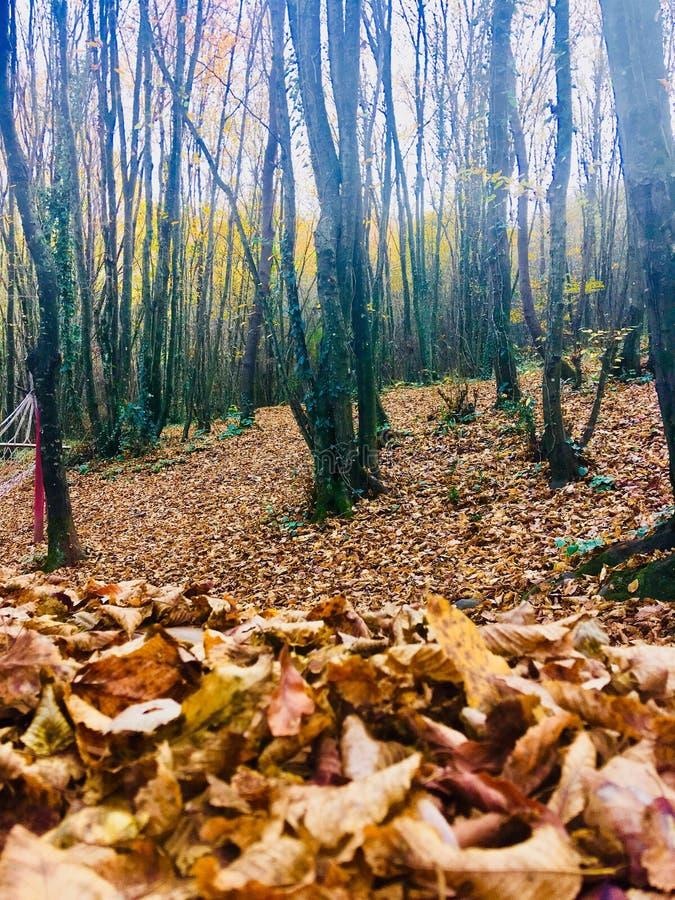 o outono das folhas imagem de stock royalty free