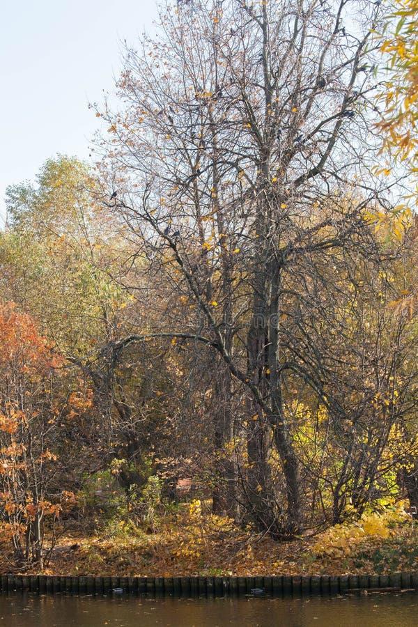 O outono dourado no parque fotografia de stock